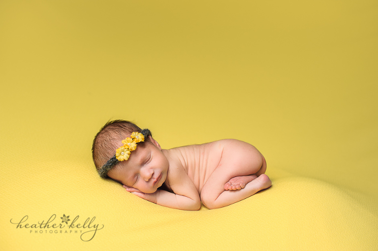 fairfield newborn photography ct newborn photographer