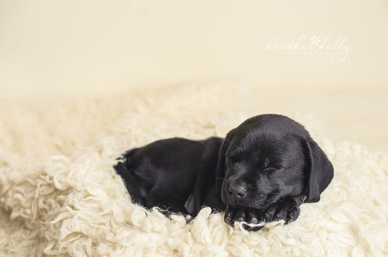Newborn Puppy Photo Session | The Exceptional Partner
