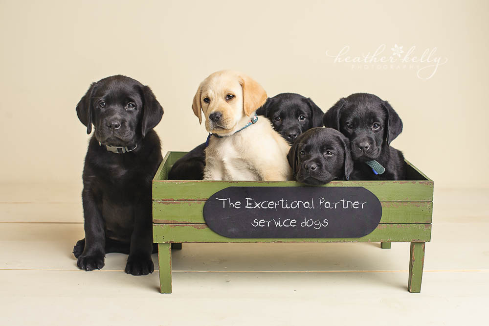 The Exceptional Pet Dog Training Newtown Ct